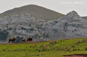 Cavalls del Vent - Ultra Pirineu