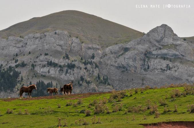 Cavalls del Vent (foto: Elena Mate)