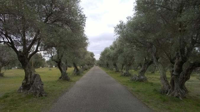 El Pardo - park se silničkami k bránám...
