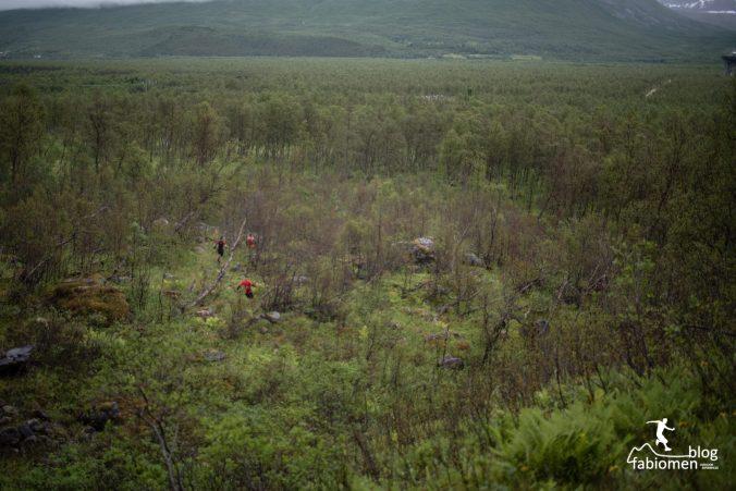 Do pohádkového lesa